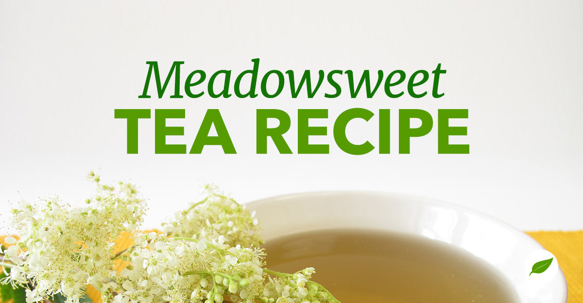meadowsweet tea