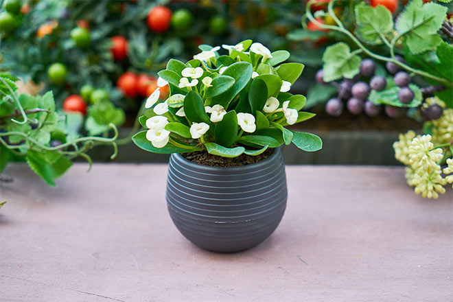 house plants for healthier home