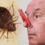 Bed bug bites: Three smells that could indicate an infestation and how to get rid of them