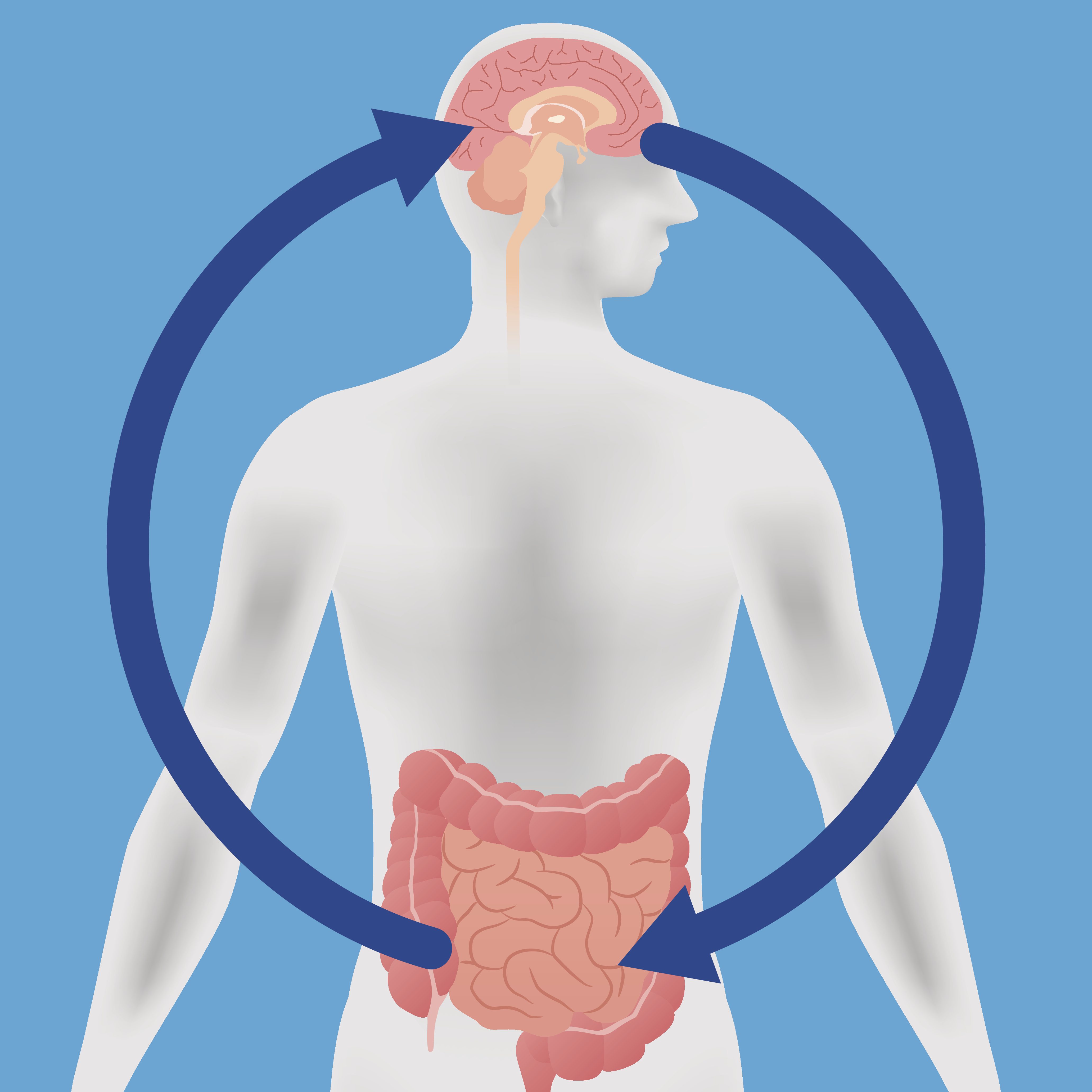 cartoon image of brain and gut in body; arrow from brain to gut and gut to brain