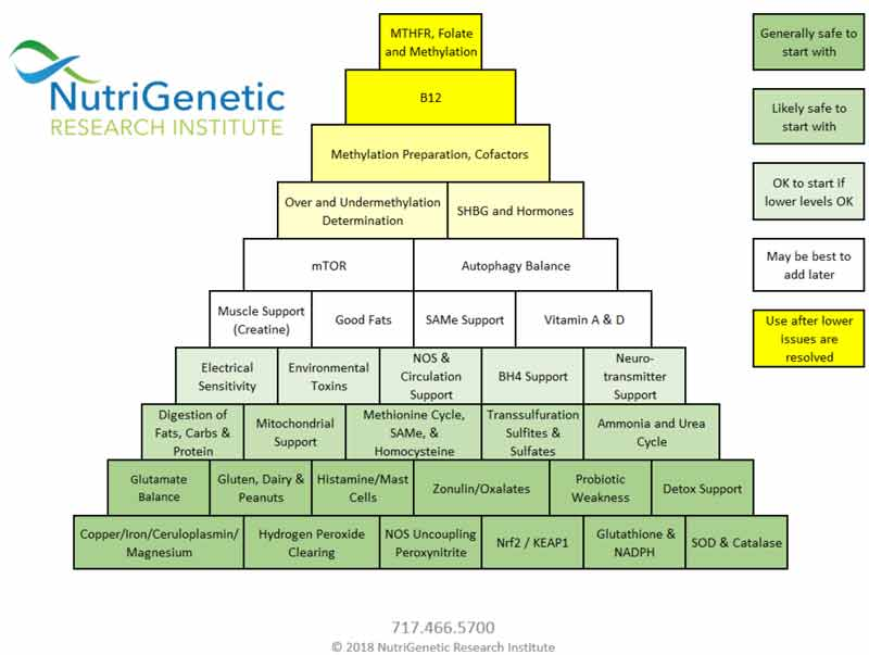 nutrigenetic hierarchical pyramid