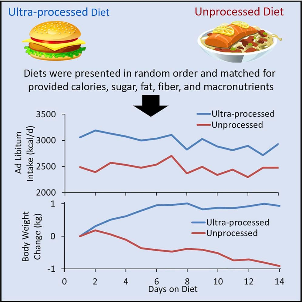 Body weight on ultra-processed vs. unprocessed diet for two weeks. (National Institutes of Health)