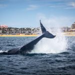 What this clinician learned from a whale watching tour