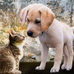 Bayer, Elanco could lock up animal health merger next week: report